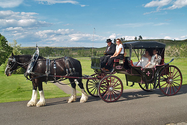 Clydesdales_June_2012_13