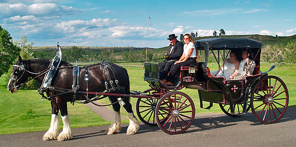 clydesdales_3_600w